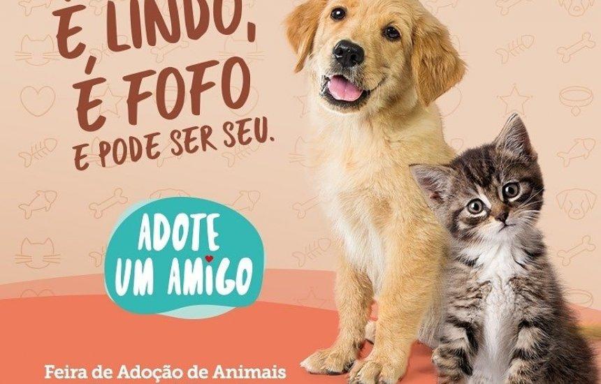[Feira de adoção de animais acontece neste sábado no Boulevard Shopping]