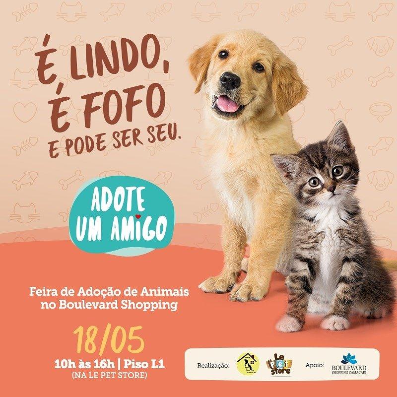 Feira de adoção de animais acontece neste sábado no Boulevard Shopping Camaçari 2