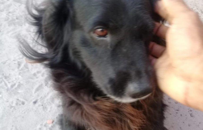 [Procura-se cachorro desaparecido no Camaçari de Dentro]