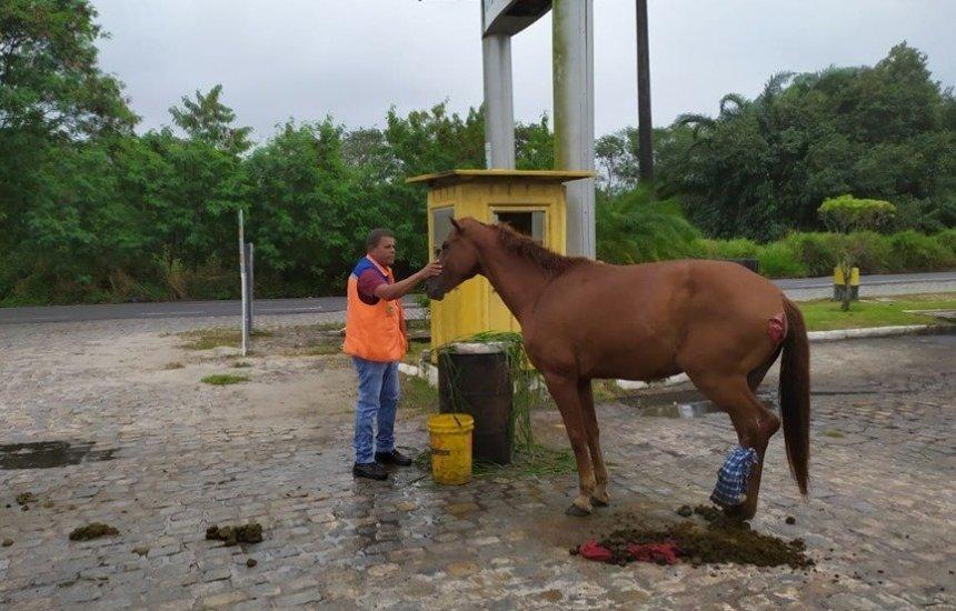 [Equipe da Defesa Civil resgata cavalo machucado em Camaçari]