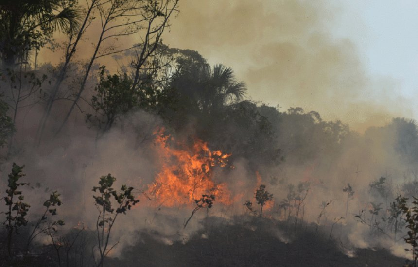 [Desmatamento na Amazônia do Brasil subiu 91% nos primeiros 7 meses de 2019]