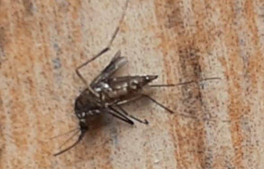 [Seu Bairro no CN: leitor reclama de infestação de mosquitos da dengue na Piaçaveira]