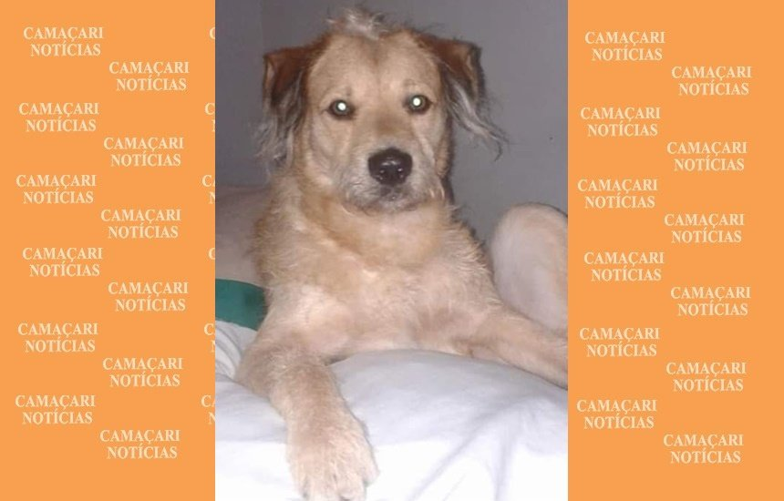 [Cão desaparece no Ficam II e dona oferece recompensa de R$ 200]