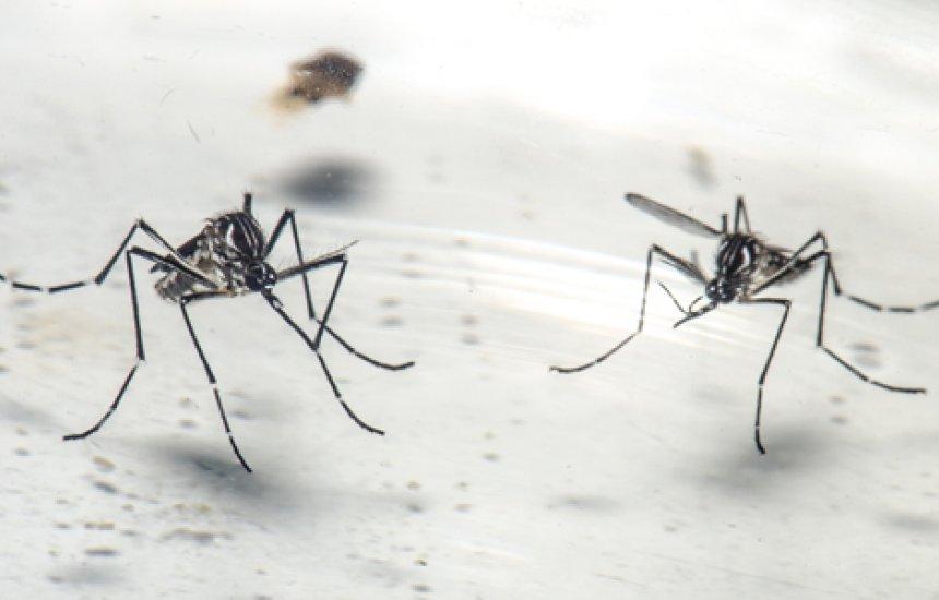 [Bahia: Casos de chikungunya crescem 434% entre 2019 e 2020]