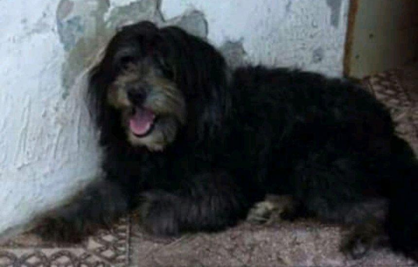 [Dona procura por cadela desaparecida no Ficam II desde o início do mês]