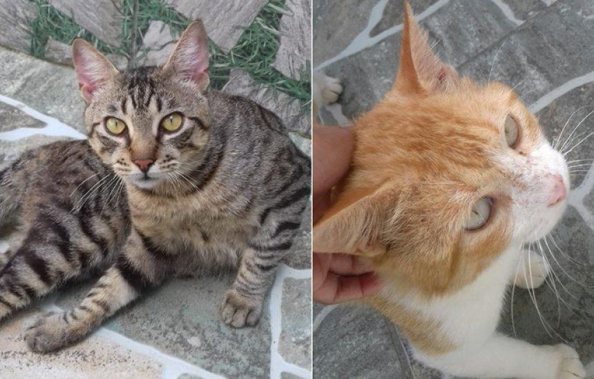 [Gatos castrados disponíveis para adoção em Camaçari]