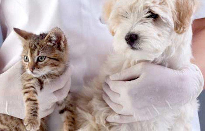 [Cadastramento de cães e gatos para castração segue em Camaçari]
