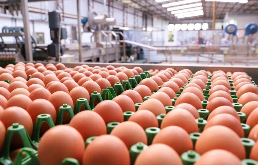 [Bahia bate recorde na produção de ovos durante segundo trimestre do ano, aponta IBGE]