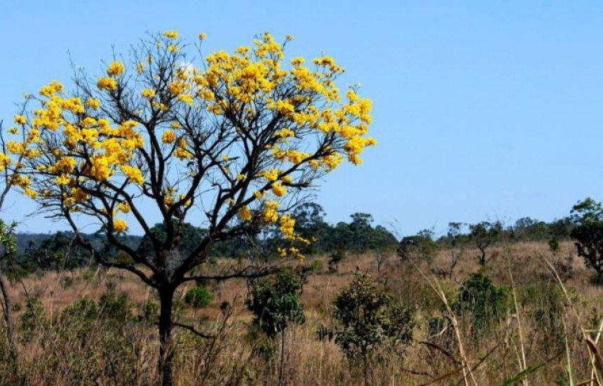 Áreas de biomas brasileiros caíram 8,34% entre 2000 e 2018