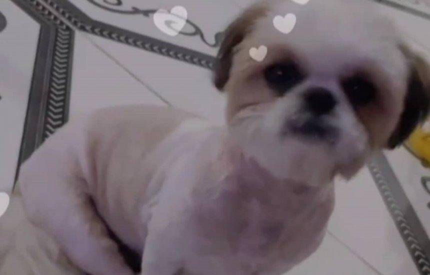 [Jovem faz apelo para recuperar cachorrinha desaparecida em Arembepe]
