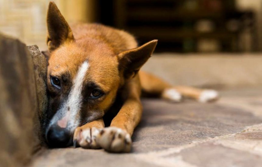 [Projeto de Lei obriga agressor a custear tratamento de animal maltratado]