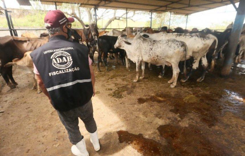 Vacinação contra Aftosa termina nesta segunda na Bahia