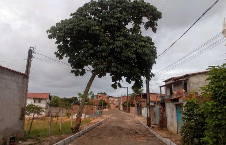 [Seu Bairro no CN: árvore força rede elétrica em rua do Parque das Mangabas]