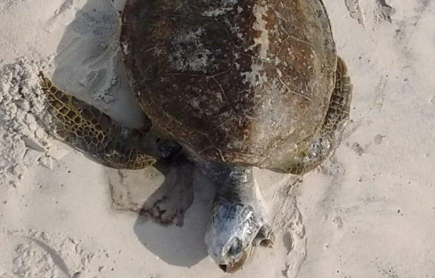 [Região sul da Bahia registra mais de 80 animais marinhos mortos em 2021]