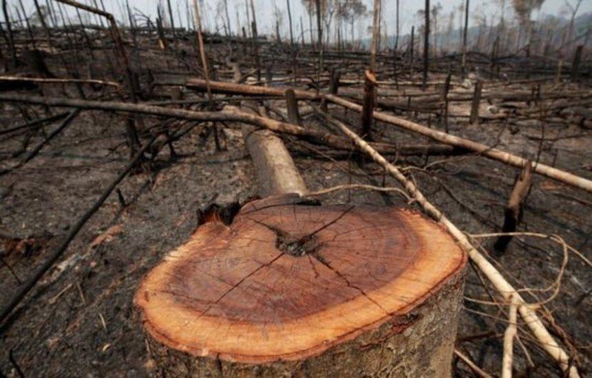 [Senadores do Partido Democrata pedem a Joe Biden que não dê dinheiro ao Brasil caso desmatamento não diminua]