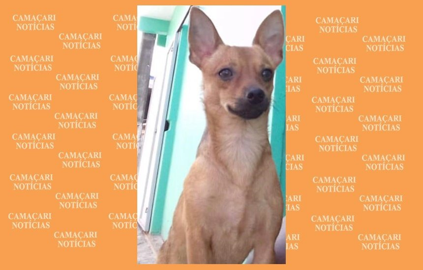 Donos procuram por cão desaparecido no bairro Nova Vitória