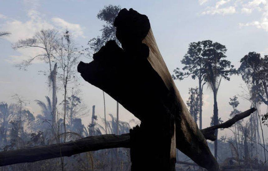 [Com 1.180 km², alerta de desmatamento na Amazônia Legal bate recorde em maio]