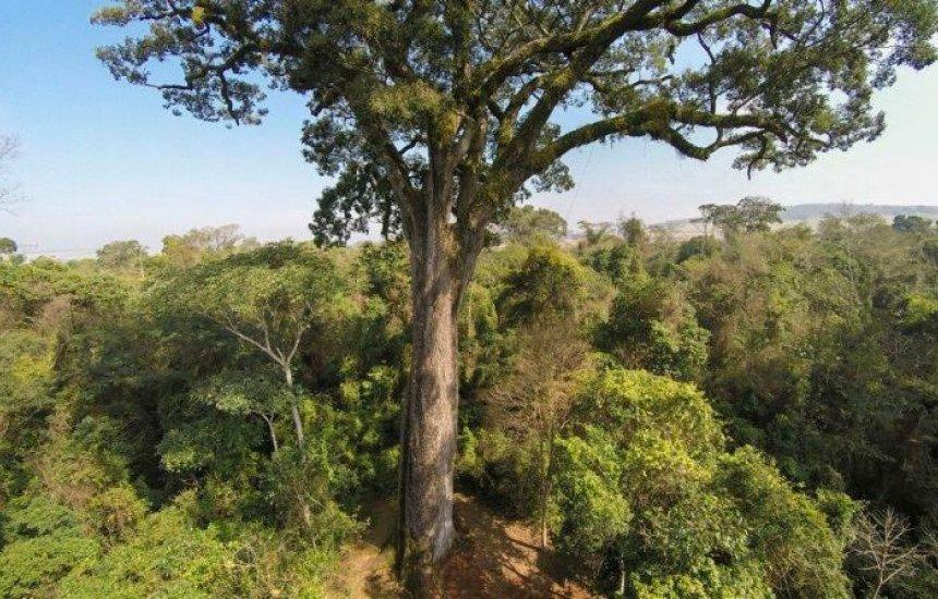 [Governo baiano afirma que tem atuado no combate ao desmatamento ilegal]
