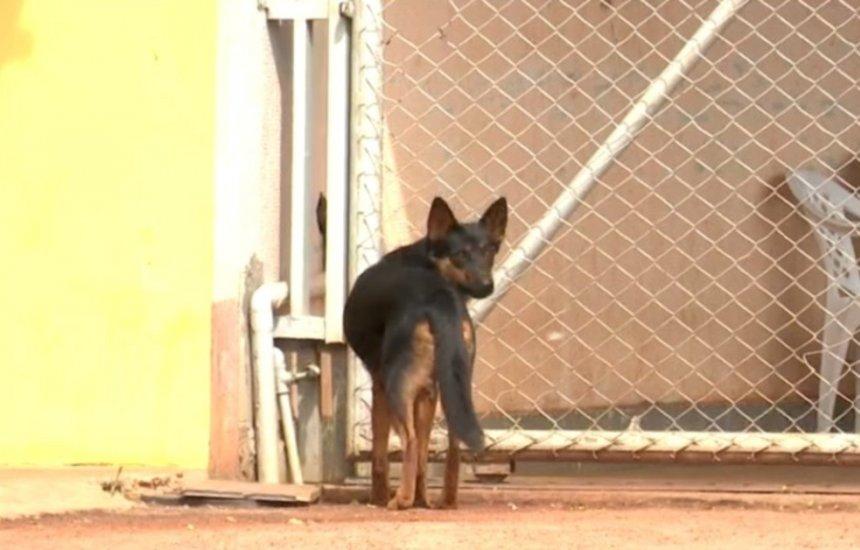 [Mais de 20 cachorros são mortos por envenenamento em menos de 24h em vilarejo no oeste da Bahia]