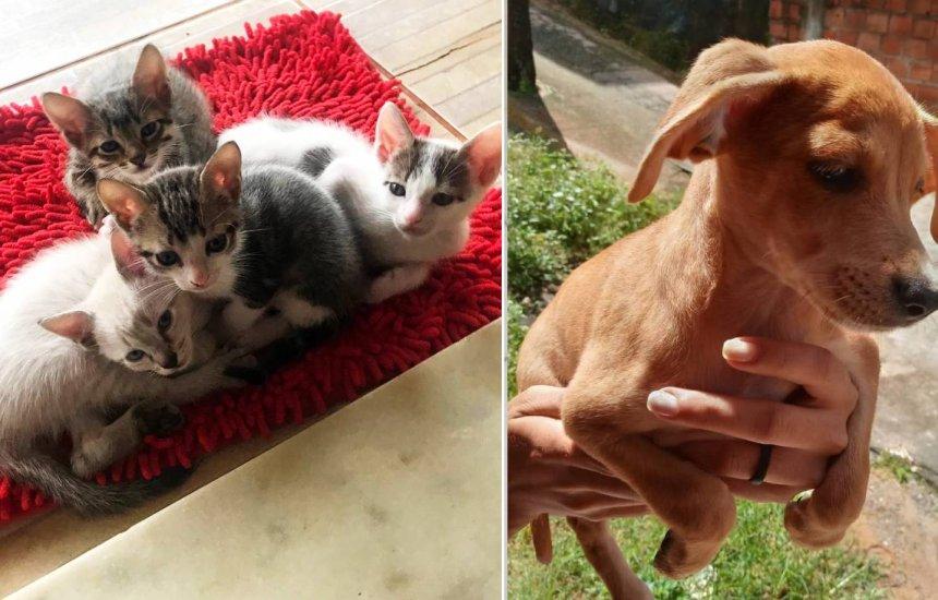 [Boulevard Shopping Camaçari e Gapar realizam feira de adoção de animais]