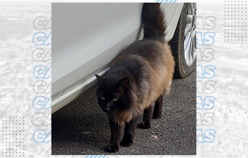 [Procura-se gato desaparecido no Parque Verde II]