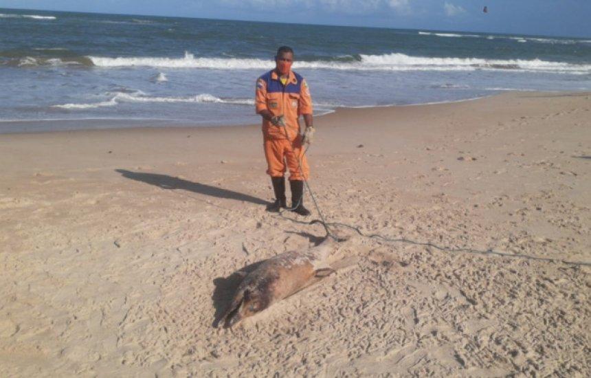 [Golfinho é encontrado em estado de decomposição na praia de Camaçari]