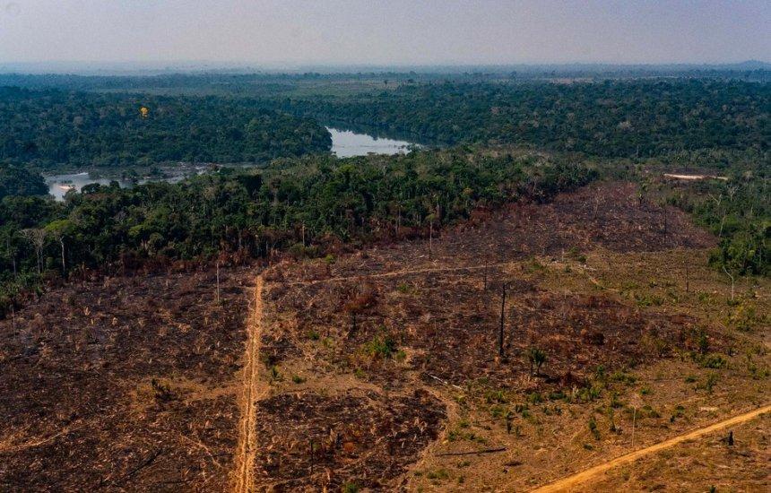 [Fim do desmatamento ilegal é uma necessidade imediata, diz presidente da Klabin]